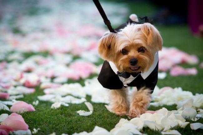 Una de sus pacientes quería casarse con su perro ya que su cara le recordaba a la de Julio César.